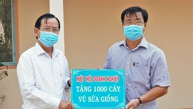 Chủ tịch Hiệp hội Doanh nghiệp tỉnh, ông Lê Hoàng Phước (trái) đại diện trao bảng tượng trưng 1.000 cây vú sữa giống tặng UBND xã Trí Lực. Ảnh: Báo Cà Mau