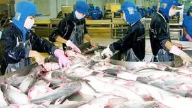 Xuất khẩu sản phẩm cá tra đạt 931 triệu USD