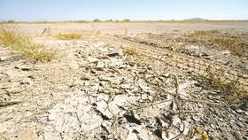Bình Định đề nghị hỗ trợ gạo cho gần 50.000 người vì hạn hán