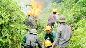 Lực lượng PCCC TPHCM đang diễn tập phòng chống cháy rừng ở huyện Bình Chánh
