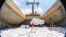 Kinh doanh xuất khẩu gạo vẫn còn rào cản
