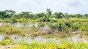 Mua đất 15 năm chưa được bàn giao
