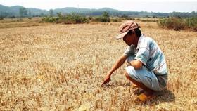 Đồng Nai cấp bách phòng chống hạn mặn trong mùa khô