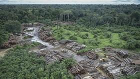 Rừng Amazon lại bị tàn phá