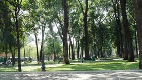 Kiểm tra toàn bộ cây xanh  trên địa bàn TP