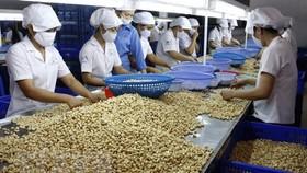 Hiệp định EVFTA: Cơ hội xuất khẩu tỷ USD cho hạt điều