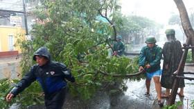 Dọn dẹp cây ngã đổ trên đường Trưng Nữ Vương,  quận Hải Châu,  TP Đà Nẵng. Ảnh: DƯƠNG QUANG