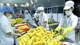 Mở thị trường cho hàng nông sản Việt Nam sang Trung Quốc