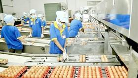 Dây chuyền đóng gói trứng thành phẩm  tại Công ty  cổ phần Ba Huân. Ảnh: CAO THĂNG