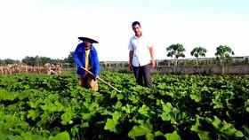 Nông dân có vai trò chủ thể và rất quan trọng trong phát triển nông nghiệp.