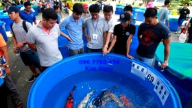 Kim ngạch xuất khẩu cá cảnh của TPHCM tăng hơn 27%