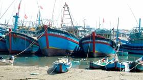 Quảng Ngãi: Tàu cá không thể ra khơi vì luồng lạch bị bồi lấp