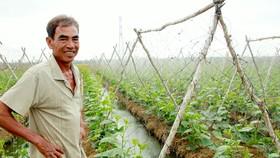 Nhờ chuyển đổi sản xuất hợp lý, nông dân  huyện Long Phú, tỉnh Sóc Trăng được vụ hoa màu Ảnh: TUẤN QUANG