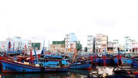 Cảng cá Tam Quan đang bị bồi lấp, quá tải
