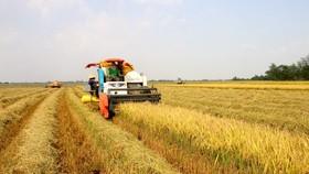 Nâng cao hiệu quả sản xuất lúa cho 8 tỉnh ĐBSCL