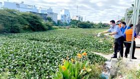 Thả thiên địch để kiểm soát lục bình tại quận Bình Tân