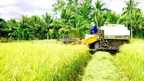 Nông dân ĐBSCL  thu hoạch lúa đông xuân trong niềm vui  được mùa - được giá Ảnh: CAO LONG