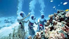 Du khách tận mắt chứng kiến các rạn san hô đẹp như trong tranh đáy biển cù lao Chàm.