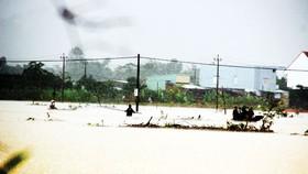 Người dân Bình Định bất chấp nguy hiểm vượt lũ vớt củi.