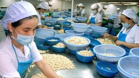 VEPR: Tăng trưởng GDP đạt 6,81% trong năm nay