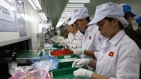 Doanh nghiệp chủ động các phương án sản xuất, kinh doanh khi dịch bệnh diễn biến phức tạp. (Ảnh: Đức Duy/Vietnam+)