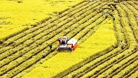 ĐBSCL được xem là vựa lúa của cả nước. Việc chốt cứng ANLT sẽ làm mềm hóa kinh tế nông dân.