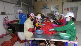 Công nhân đang phân loại ớt-Công ty Dace (Ảnh CTV/Vietnam+)