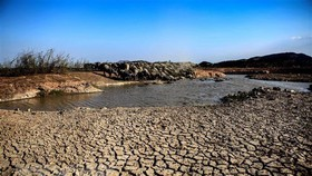 Đàn trâu người dân chăn thả trong lòng Hồ Suối Đá, Hàm Thuận Bắc, tỉnh Bình Thuận chen chúc tắm mát tại một vũng nước còn sót lại. (Ảnh: TTXVN)
