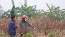 Bộ Lao động đề xuất 2 phương án nghỉ Tết Tân Sửu 2021 dài 7 ngày