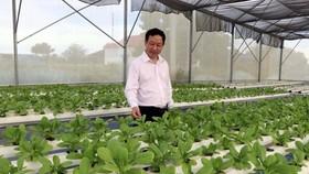 Nhiều hợp tác xã đầu tư phát triển trồng rau màu theo hướng hữu cơ thủy sinh. (Ảnh: Công Thử/TTXVN)