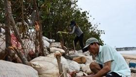 Người dân tham gia chằng chống khu vực ven biển trước bão số 9. (Ảnh: TTXVN phát)