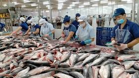 Vasep: DN tránh nôn nóng chào giá cá tra thấp sang Trung Quốc