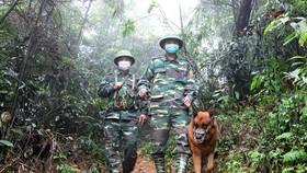 Lực lượng Bộ đội Biên phòng Hà Tĩnh tuần tra kiểm soát nhằm ngăn chặn người nhập cảnh trái phép. Ảnh: DƯƠNG QUANG