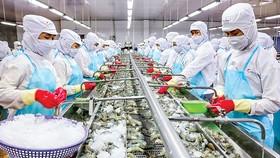 Ngành thủy sản vẫn kỳ vọng kim ngạch xuất khẩu tôm năm 2021.