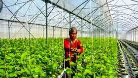 An Giang đẩy mạnh phát triển nông nghiệp công nghệ cao, thân thiện môi trường.