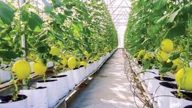 Việt Nam có điều kiện thiên nhiên thuận lợi để phát triển nông nghiệp công nghệ cao.