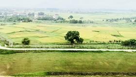 Tập trung thanh tra đất đai dễ phát sinh các vấn đề sai phạm