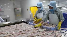 Chế biến cá tra xuất khẩu tại Công ty Công nghiệp Thủy sản Miền Nam. (Ảnh: TTXVN)