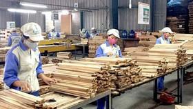 """""""Lỗ hổng"""" gỗ hợp pháp trong đấu thầu mua sắm công"""