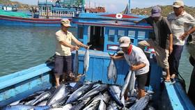 Cùng ngư dân tìm giải pháp gỡ thẻ vàng EC