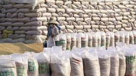 Gạo xuất khẩu của Việt Nam tiếp tục đạt giá cao. (Ảnh: TTXVN)