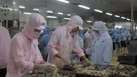 Chế biến cá hộp xuất khẩu tại Khu công nghiệp Cảng cá Tắc Cậu, xã Bình An, huyện Châu Thành (Kiên Giang). (Ảnh: Lê Huy Hải/TTXVN)