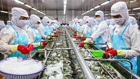 Tôm Việt Nam sẽ có cơ hội nhiều hơn tại Mỹ, khi Ấn Độ - nguồn cung lớn nhất tại thị trường này đang gặp khó khăn về sản xuất do dịch Covid-19.