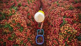Dành thế chủ động cho nông sản