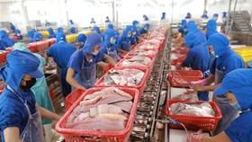 Doanh nghiệp chế biến cá tra xuất khẩu. (Ảnh: TTXVN)