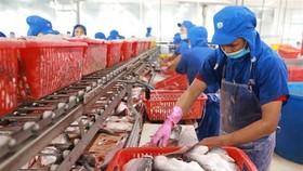 Chế biến cá tra cắt khúc đông lạnh xuất khẩu. (Ảnh: Vũ Sinh/TTXVN)