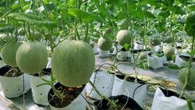 Nguồn cung ứng nông sản cho chương trình đến từ các đối tác được chọn lọc của Sendo, đạt các chứng nhận theo tiêu chuẩn nông sản sạch Vietgap.