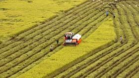 Doanh nghiệp phản ánh, trong lĩnh vực nông nghiệp, việc tiếp cận vốn vay rất khó khăn