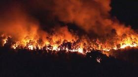 Một vụ cháy rừng ở Hà Tĩnh năm 2019