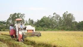 Chính sách miễn thuế sử dụng đất nông nghiệp là tiếp tục thể chế hóa quan điểm, chủ trương của Đảng và Nhà nước về nông nghiệp, nông dân, nông thôn